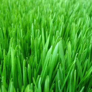 """Отдушка косметическая """"Свежескошенная трава"""""""